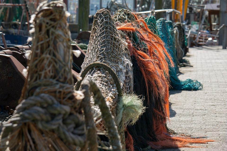 Браконьерство: Сенаторы готовят до 5 лет тюрьмы браконьерам