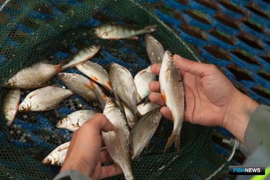 О рыбалке: Памятка рыболова спасет от нарушений
