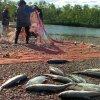 Квоты на вылов рыбы