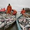 Рынок: Компания X5 Retail Group готова без посредников приобретать камчатскую рыбу