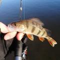 Тренировка перед Золотой рыбкой. Попытка номер раз