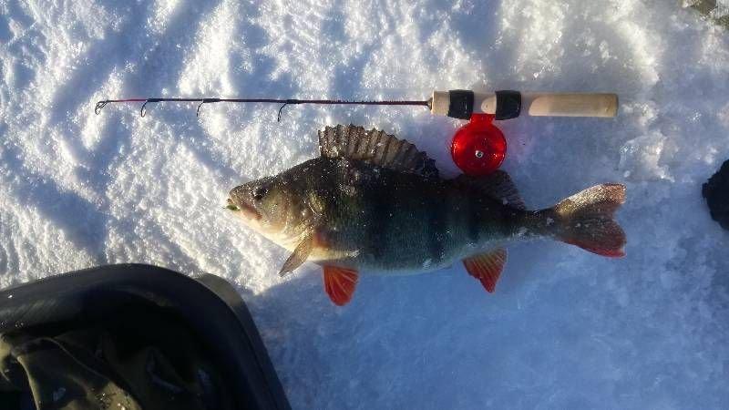Фото Ульяновского рыболовного интернет клуба