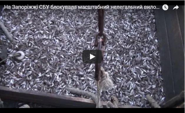 Задержание браконьеров на Азове