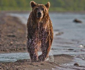 Как выглядит медвежья рыбалка (ФОТО)
