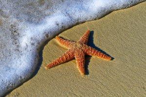 В мире: Подводная экосистема останется без песка