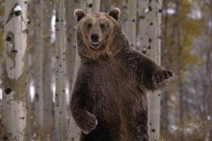 Случай с медведем произошедший на рыбалке