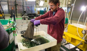 Инновации спасут океан от нефтяных клякс (ВИДЕО)