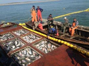 """Промысел: В Хабаровском крае ловля рыбы будет проходить по """"олимпийской системе"""""""