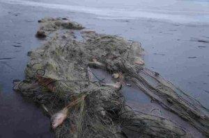 Браконьерство: Херсонские рыбинспекторы изъяли у браконьеров 361 килограмм рыбы