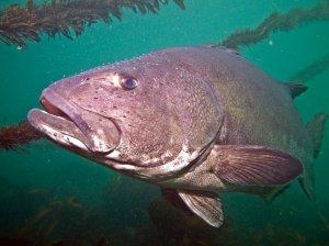 Кислотность океана угрожающе влияет на обитателей