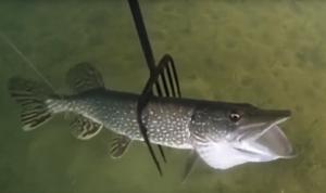 Закон: Информацию об изготовлении острог для ловли рыбы в России признали запрещенной