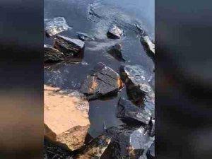 Экология: Геноцид акваторий Приморья