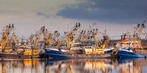 Регионы: В Приморском крае была оценена эффективность субсидий, выделяемых на рыбную отрасль