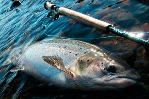 Промысел: Названа дата открытия рыболовного сезона в Заполярье