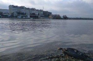 Севастопольские бухты просят помощи | Форпост