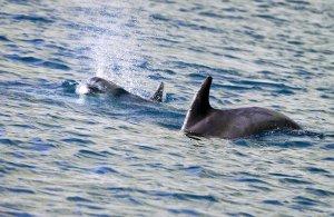 В мире: День китов и дельфинов