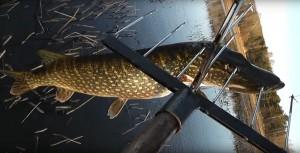 В Сызрани браконьеры из Тольятти набили острогой 10 щук