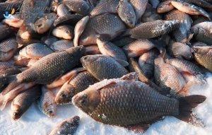 Регионы: Тюменская рыбная продукция может обзавестись собственным торговым знаком