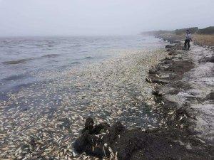 Замор: Массовая гибель сельди на Сахалине (ФОТО)