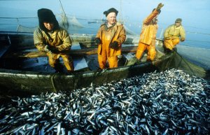 Наука: Учёными представлены советы и рекомендации, которые могут пригодиться Балтийским рыболовам