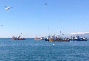 Ученые собирают данные о хамсе в водах Абхазии