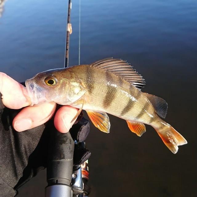 Отчет тренировки: Тренировка перед Золотой рыбкой. Попытка номер раз.