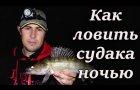 Как ловить судака ночью