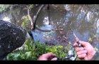 Ловля ручьевой форели