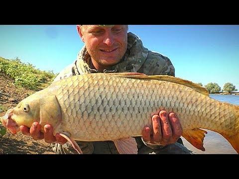 Отчет о рыбалке: Самый крупный сазан этого года